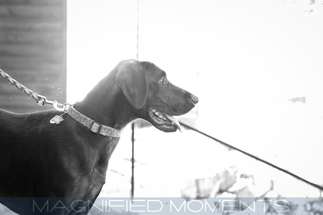 Pet Photography, Kansas City, Portrait Photographer, Modern, Fun, Senior Portraits